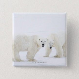 Polar Bears standing on snow after playing 2 15 Cm Square Badge