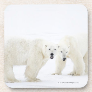 Polar Bears standing on snow after playing 2 Coaster