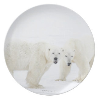 Polar Bears standing on snow after playing 2 Dinner Plates