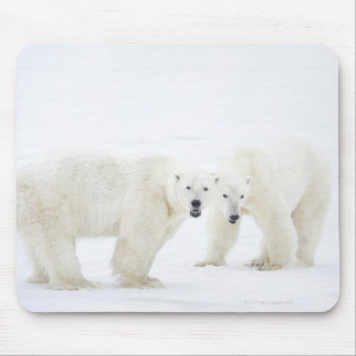 Polar Bears standing on snow after playing 2 Mouse Mat