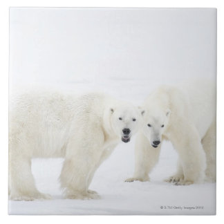 Polar Bears standing on snow after playing 2 Tile