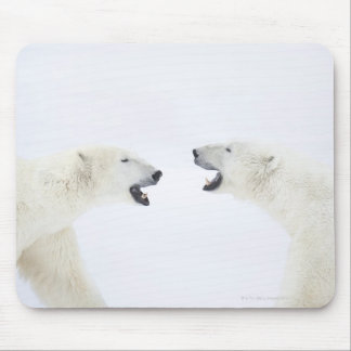 Polar Bears standing on snow after playing Mouse Mat