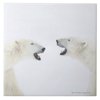 Polar Bears standing on snow after playing Tile