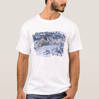 Polar Bears Ursus maritimus), gather around T-Shirt