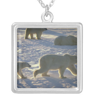 Polar bears Ursus maritimus) Two females, Silver Plated Necklace