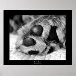 Polar Paws Dog Black Border Poster
