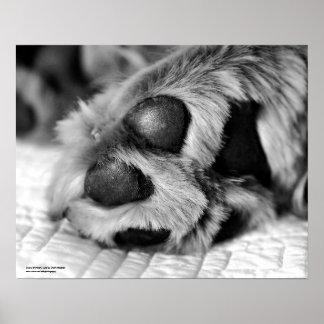 Polar Paws Golden Retriever Dog Poster