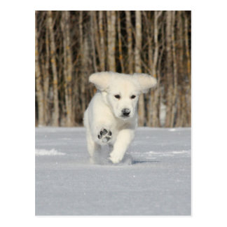 Polar Puppy Postcard