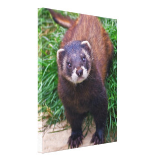 Polecat Wrapped Canvas