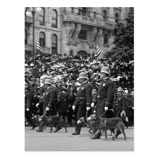 Police Dogs on Parade: early 1900s Post Card