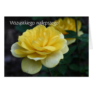Polish Birthday Card Sto Lat Yellow Rose