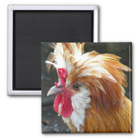 Polish Chicken Photo Magnet