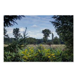 Polish Meadow in summer Poster