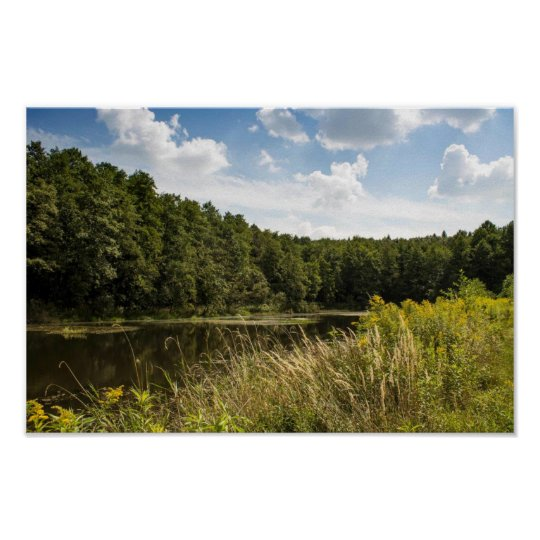 Polish pond by pine trees poster