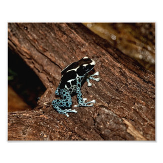 Polka Dot Frog Photo Print