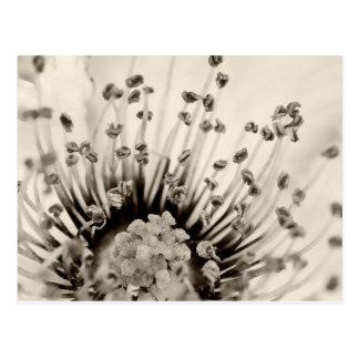 Pollenation Postcard