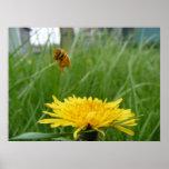 Pollenface Honeybee Poster