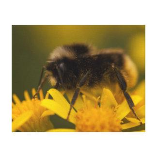 Pollinating Bumblebee Canvas Print