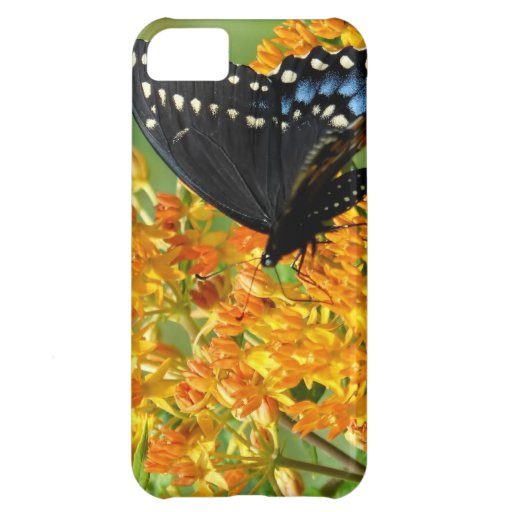 Pollinating Butterfly iPhone 5C Cases