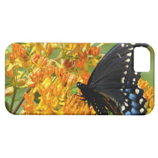 Pollinating Butterfly iPhone 5 Case