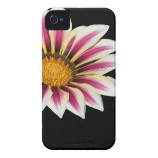 Pollination of Gazania flowerhead isolated on dark iPhone 4 Case-Mate Cases