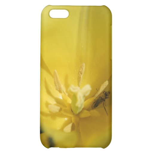 Pollinator Cover For iPhone 5C