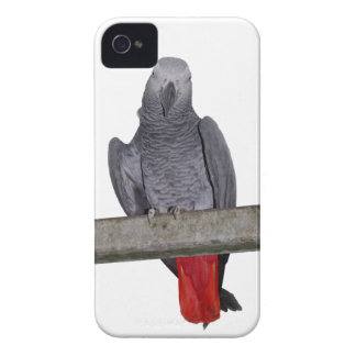 Polly iPhone 4 Case