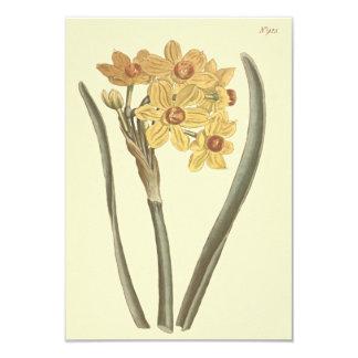 Polyanthus Narcissus Botanical Illustration 9 Cm X 13 Cm Invitation Card