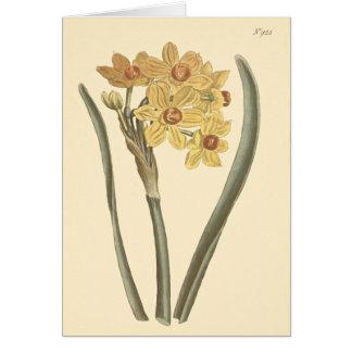 Polyanthus Narcissus Botanical Illustration Greeting Card