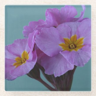 Polyanthus Pink Champagne Floral Glass Coaster
