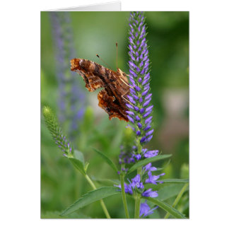 Polygonia Butterfly Notecard (side view) Greeting Card