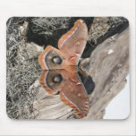 Polyphemus Moth Vertical Mouse Pad