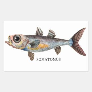 POMATOMUS RECTANGULAR STICKER