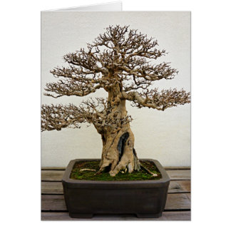 Pomegranate Bonsai Tree Card