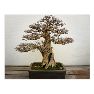 Pomegranate Bonsai Tree Postcard
