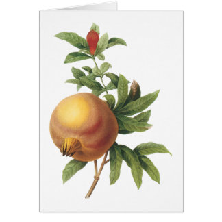 pomegranate(Grenadier punica) by Redouté Greeting Card
