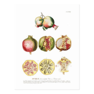 Pomegranate Postcard