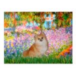 Pomeranian 3 - Garden Postcards