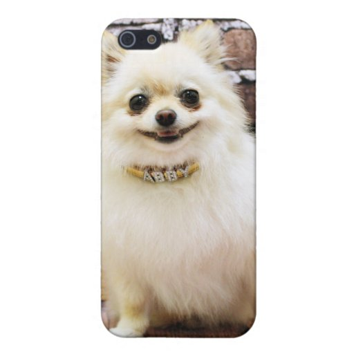 Pomeranian - Abby Vanity Collar Cases For iPhone 5