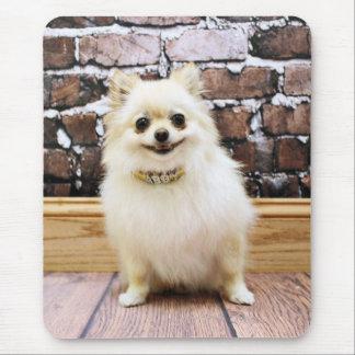 Pomeranian - Abby Vanity Collar Mouse Mat