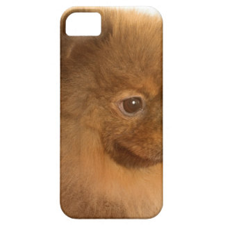 Pomeranian Barely There iPhone 5 Case