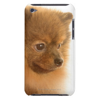 Pomeranian Barely There iPod Cases