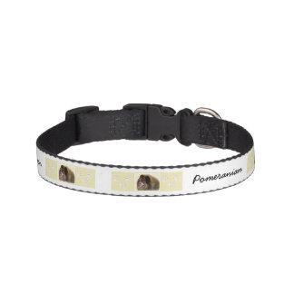 Pomeranian (Black and Tan) Pet Collar