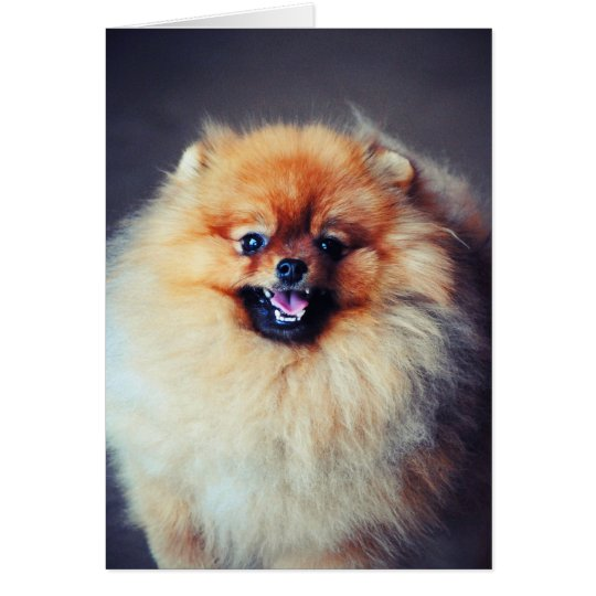 Pomeranian Card
