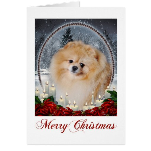 Pomeranian Christmas Card