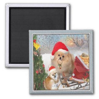 Pomeranian christmas fun magnet