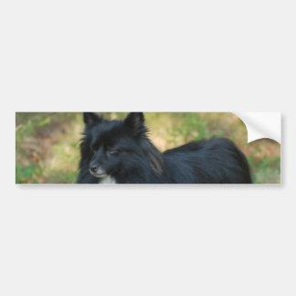 Pomeranian Dog Bumper Sticker Car Bumper Sticker