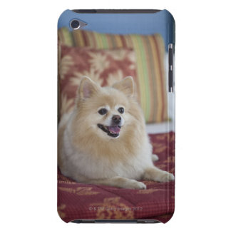 Pomeranian dog in pet friendly hotel room barely there iPod covers