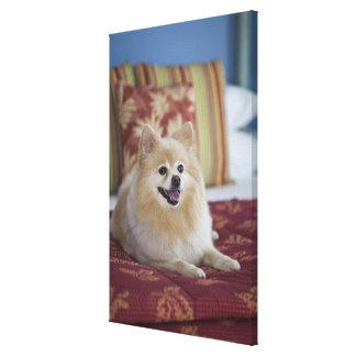 Pomeranian dog in pet friendly hotel room canvas print