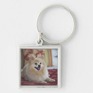 Pomeranian dog in pet friendly hotel room key ring